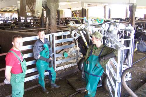 Satisfied customers from the Estonia with our SA0039 (H) HOOF TRIMMING CRUSH