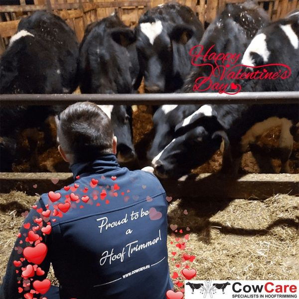 Valentines day-CowCare