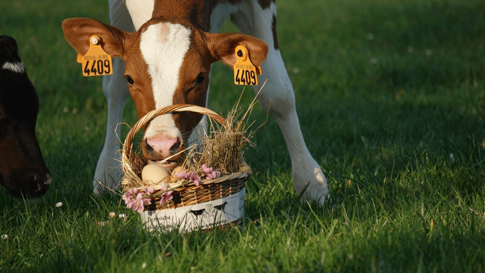 CowCare wish you all a Happy and Healthy Easter