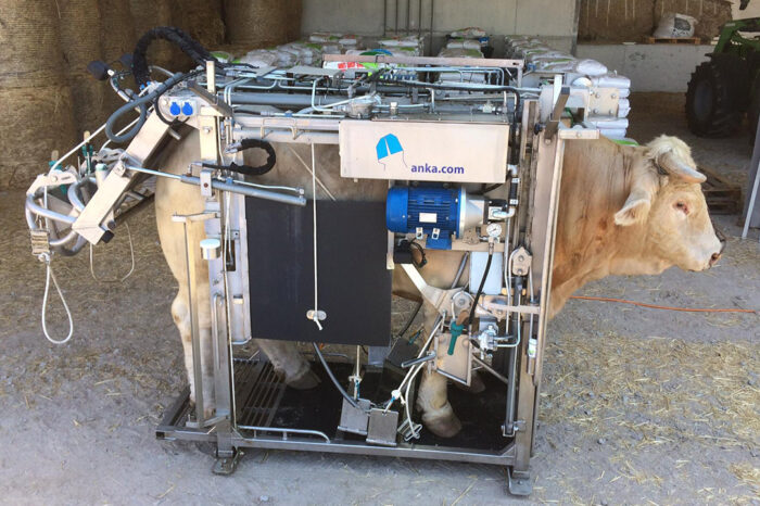 hoof-trimming-chute-anka-crush-pro-for-bulls-2