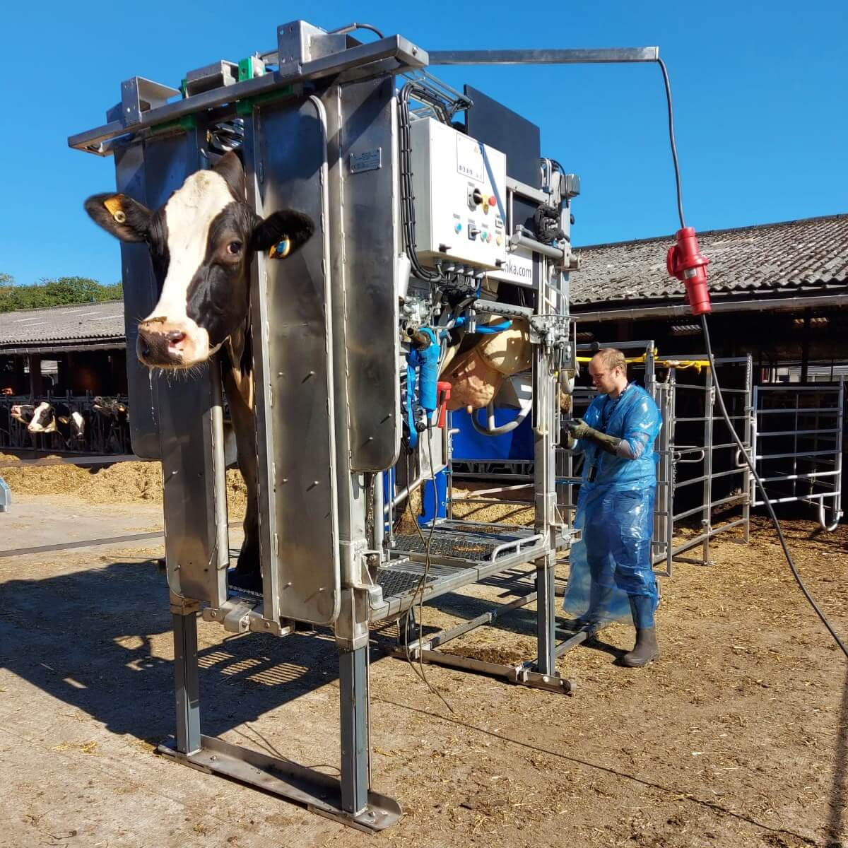 Hoof-trimming-chute-for-rent-try-out