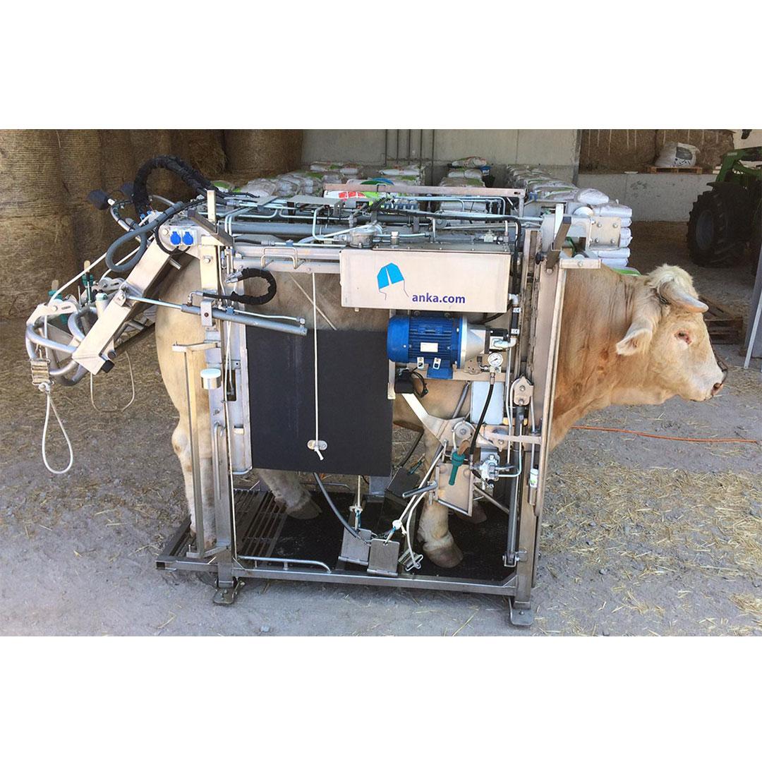 hoof-trimming-chute-anka-crush-pro-for-bulls